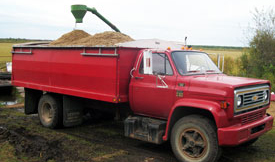 Truck being loaded with wild rice